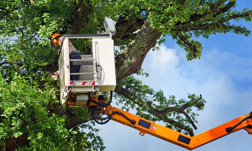 tree trimming company houston