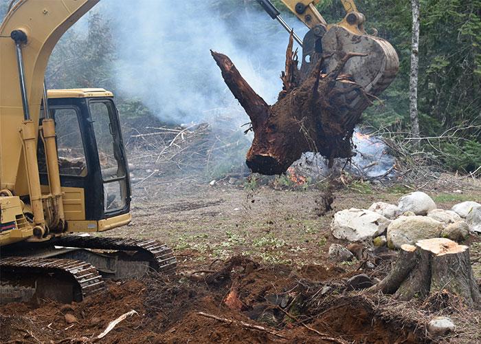 houston tree removal service