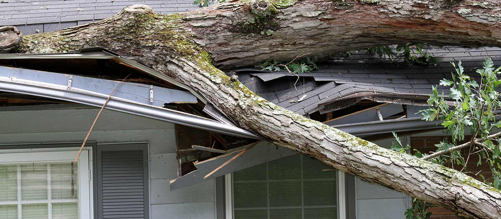 tree removal services houston tx